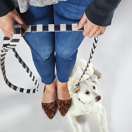 Leashes + Collars